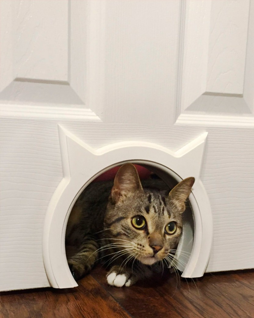 Litter Box Enclosure | Narrow Litter Box | Hidden Cat Litter Box